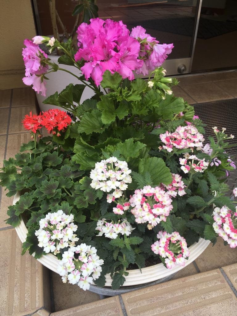 新しいお花が仲間入りしました♪